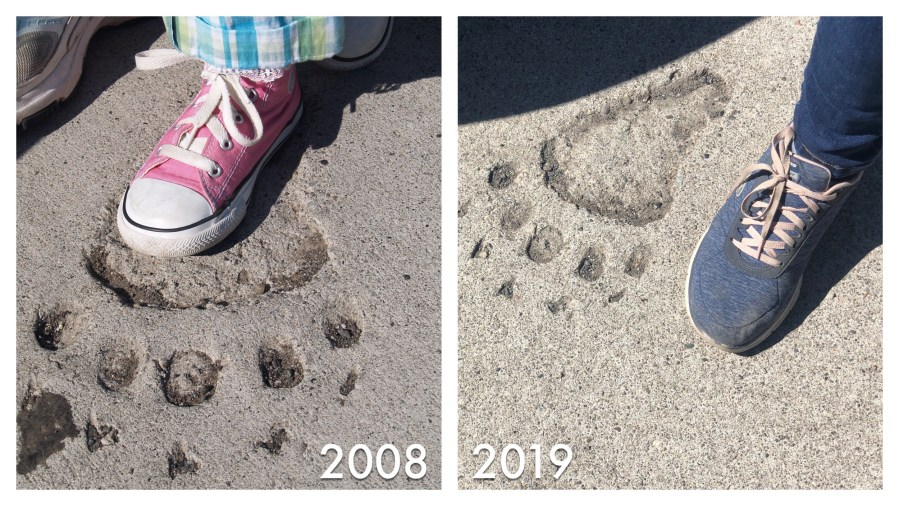 West Thumb Geyser Basin 2008 and 2019