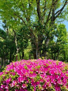 2020/05/01よく晴れた日のGW公園