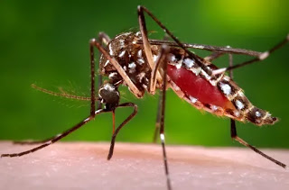 Neurotoxin that specifically targets Anopheles mosquitoes discovered