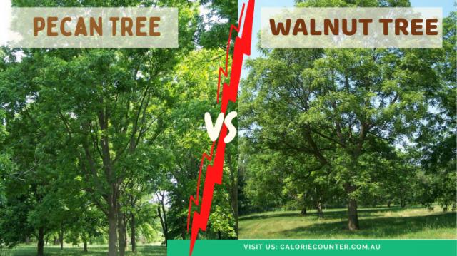 pecan and walnut tree