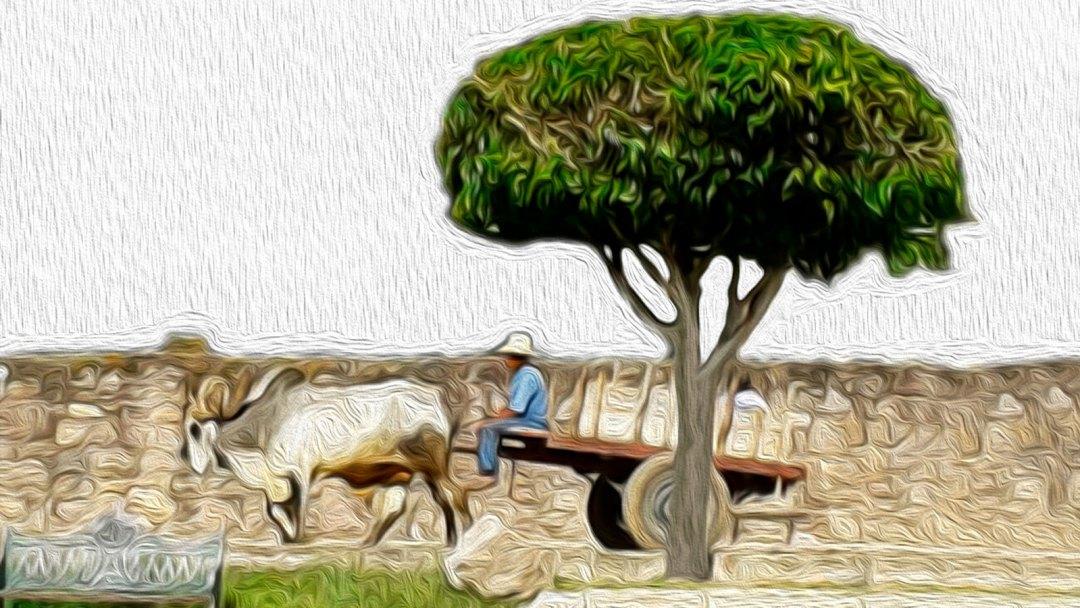 Solar Oxen Cart