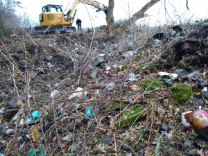 Caltha at a waste removal and soil cleanup dump site in Minnesota