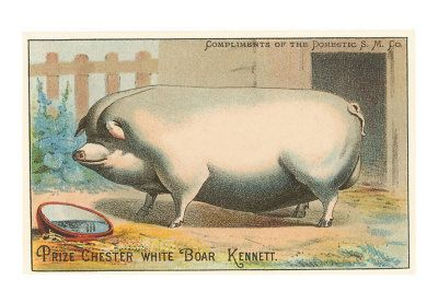 TC-00065-D~Bloated-Pig-Posters