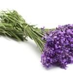 Elixir Floral de Lavande Fine bio