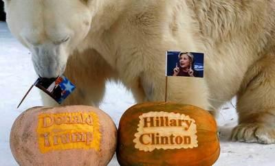 Félix, oso polar Siberia elecciones