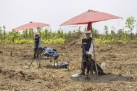 Cambodia Sees Its First Month Without Mine, UXO Victims