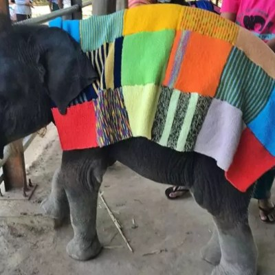 SAVE ELEPHANT FOUNDATION
