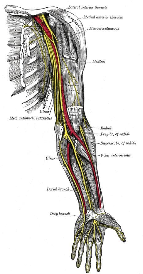 Cambridge Orthopaedics - UK