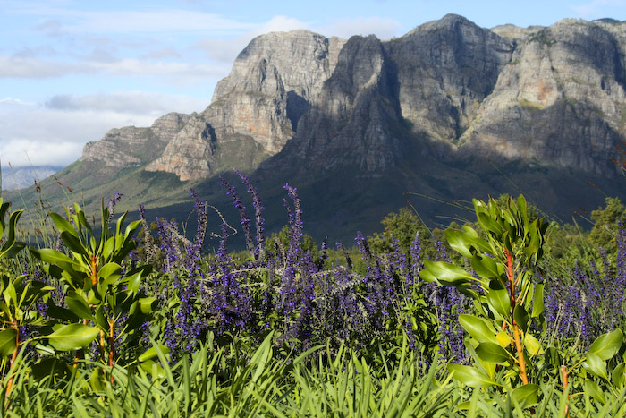 Stellenbosch | How to do South Africa's Wine Country