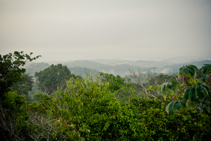 Gamboa | Panama rainforest