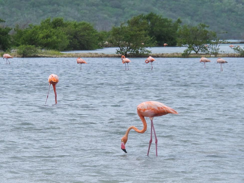 Flamingos + Beaches: The West Coast of Curacao