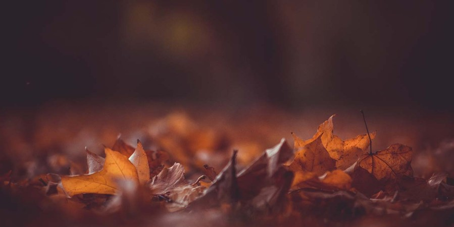 9 quick ways to improve autumn colours in your images