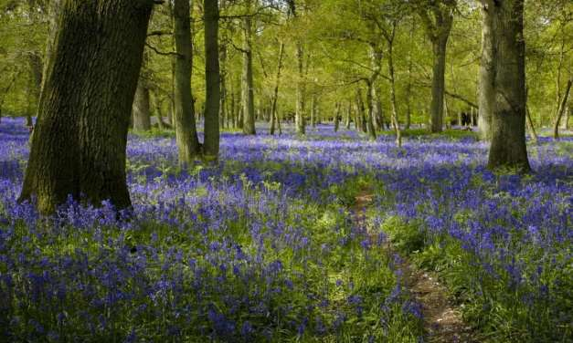 How to photograph bluebells