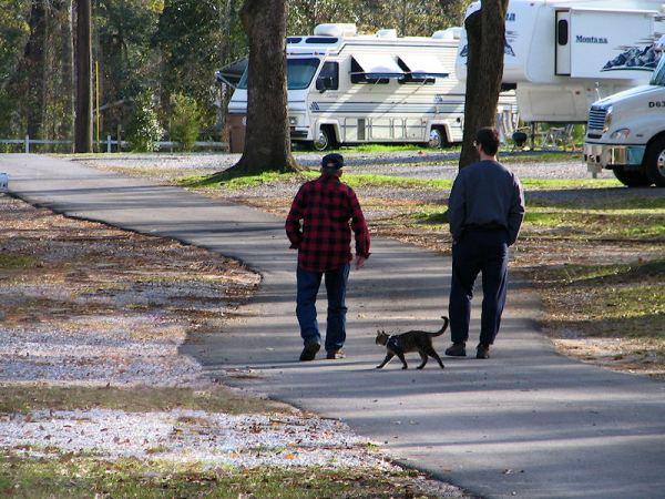 Brent VanFossen and Howard West, walking the cat, photograph by Lorelle VanFossen
