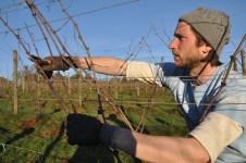 Dan pruning Clos Electrique vines
