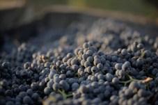 Clos Electrique Pinot noir