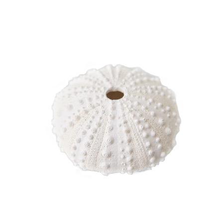 Resin Stone Sea Urchins
