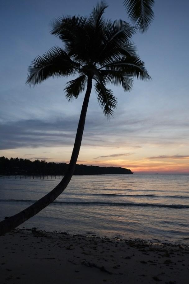 Koh Kood Palm tree