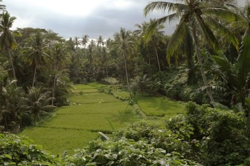 Ubud outskirt