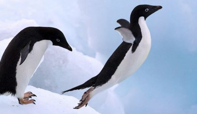 Penguin est maintenant intégré à l'algo de Google