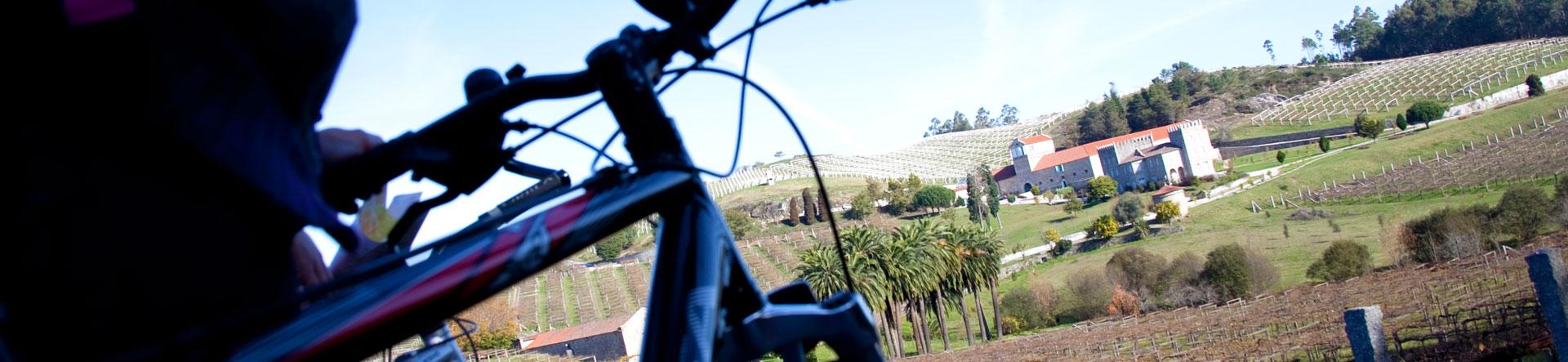 Bici viñedos
