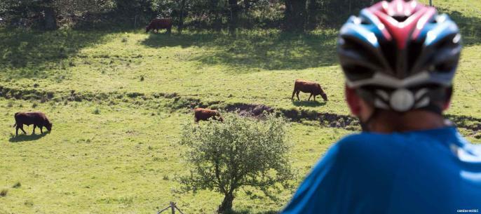 Todas las ventajas del Camino Francés en grupo y en bicicleta - Peregrino