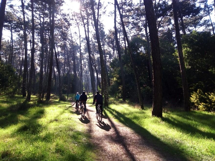 Bosque bicicletas