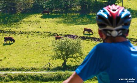Camino de Santiago de Compostela en Bicicleta