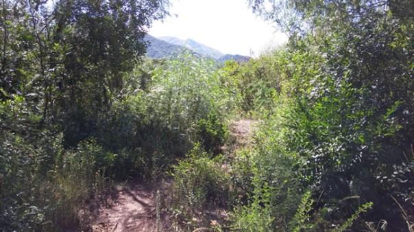 Camino del Monte