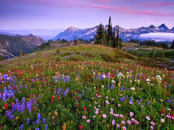 Flores Silvestres Diversas