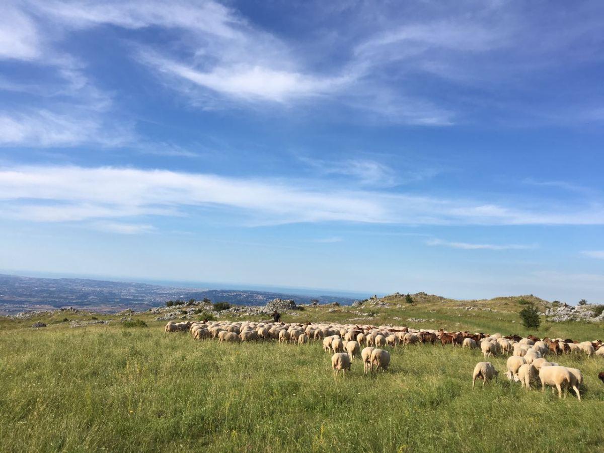 Con le pecore su per monti - la Transumanza