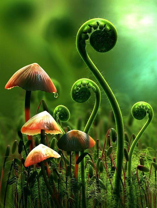 Mushrooms and Ferns, Marin County, California