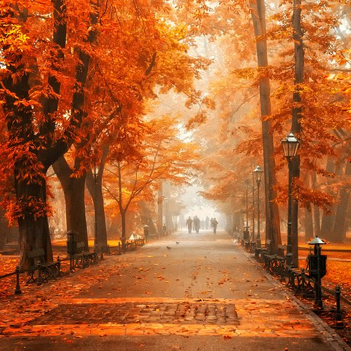 Autumn Orange, Krackow, Poland