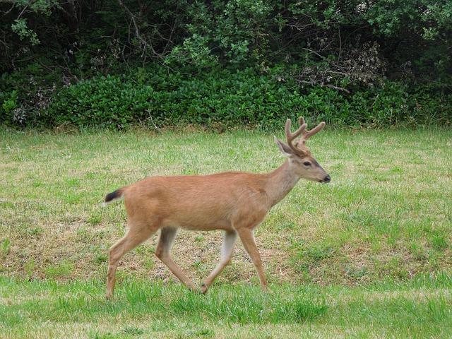Top 11 Deer Hunting Tips