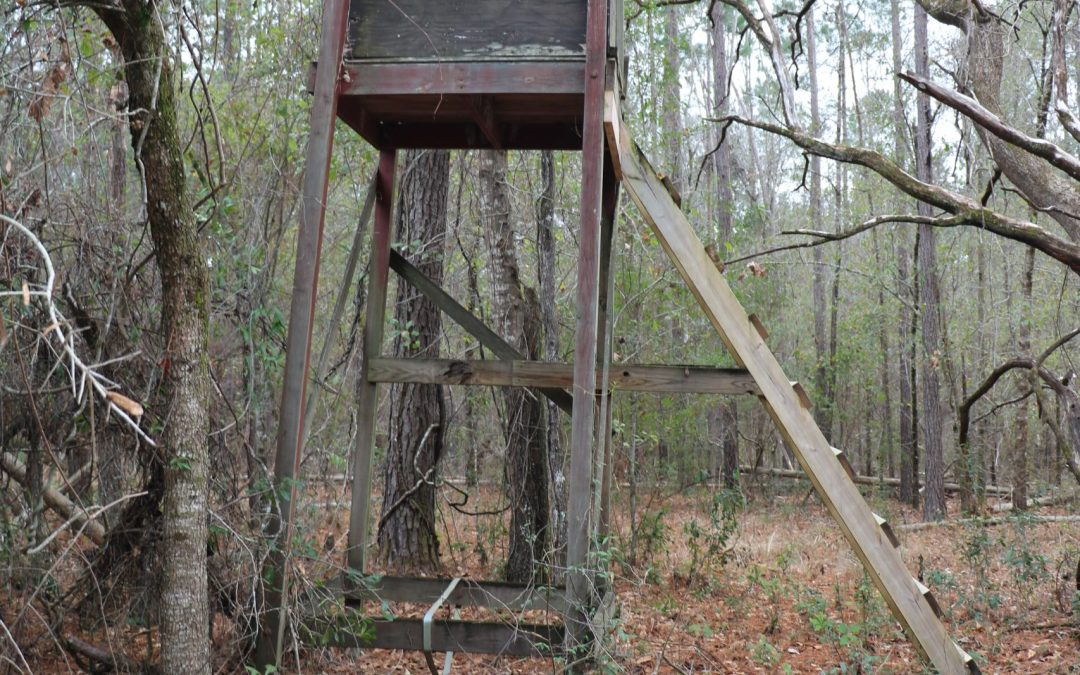 If This Old Weathered Deer Stand Could Talk