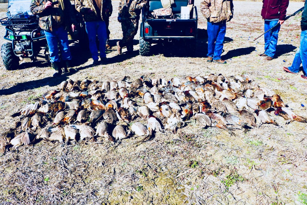 our camp had a good pheasant tower hunt