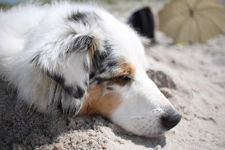 Die Mittagshitze könnt ihr gut für eine Pause für euch und euer Haustier nutzen. Ein Schläfchen im Schatten gibt eurem Hund neue Kraft.