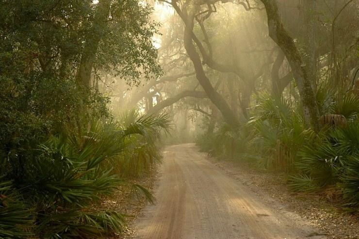 Ein Wanderweg in einem Wald. Durch das Blätterdach brechen Sonnenstrahlen.