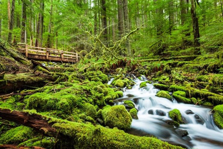 Der Sol Duc Falls-Pfad im Wald.