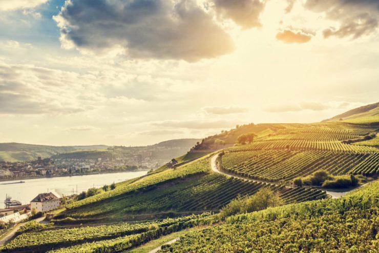 Weinberge und typische Landschaft rund um den Rhein.