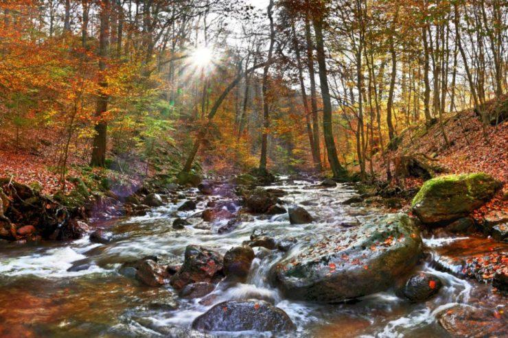 Ein Fluss in einem herbstlichen Wald im Harz.