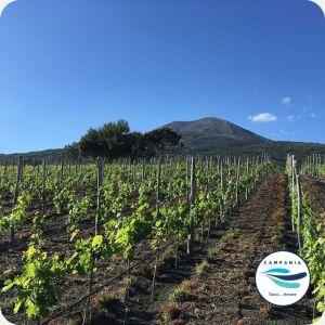 vitigni Vesuvio - selezione vini campani Campania Tipica