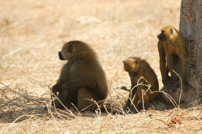 singes-dans-le-parc-du-campement-diu-niombato-9-1080p