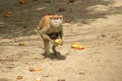 singes-dans-le-parc-du-campement-du-niombato-13-1080p