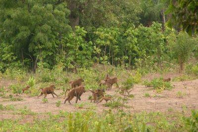 singes-dans-le-parc-du-campement-du-niombato-14-1080p