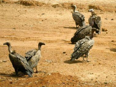 vautours-charognards-1080p