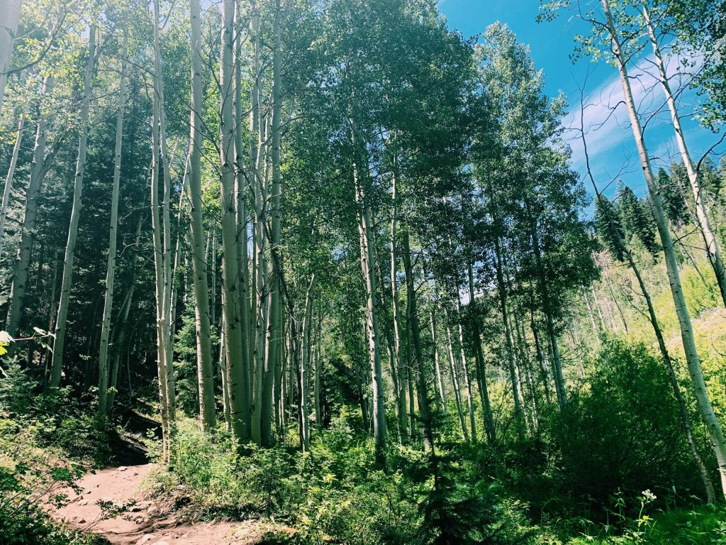 Content marketing for forests