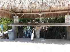 Big Pine Key Fishing Lodge in Big Pine Key Florida07