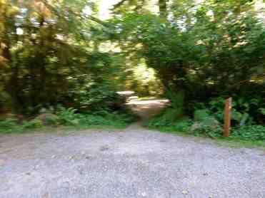 Bogachiel-State-Park-Campground-06