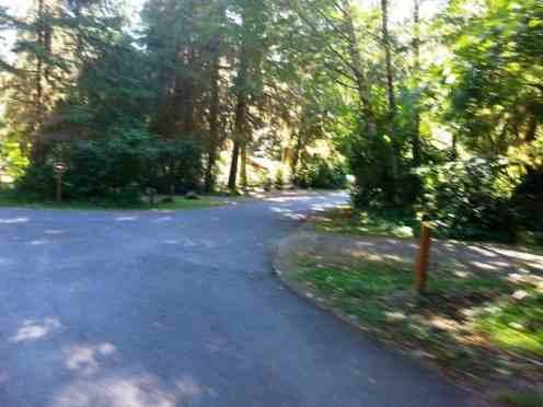 Bogachiel-State-Park-Campground-10